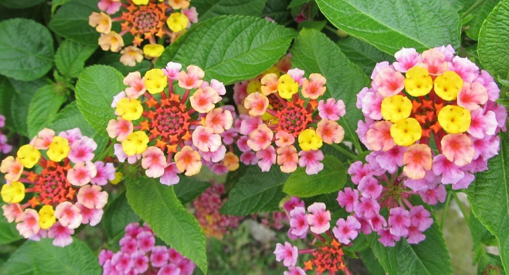 Crean jardín para atraer a polinizadores